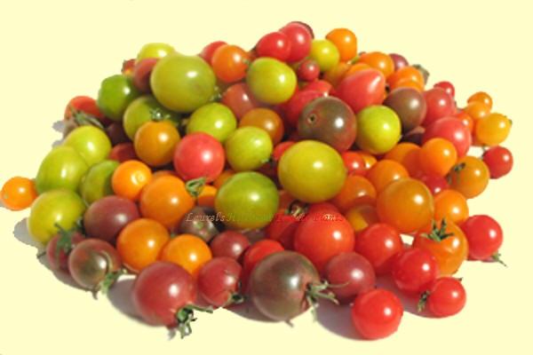 Heirloom Tomato Plants Organic Heirloom Tomato Plants Tomato Seeds